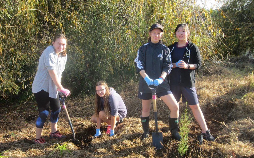 Year 8 Global Perspectives students plant native trees
